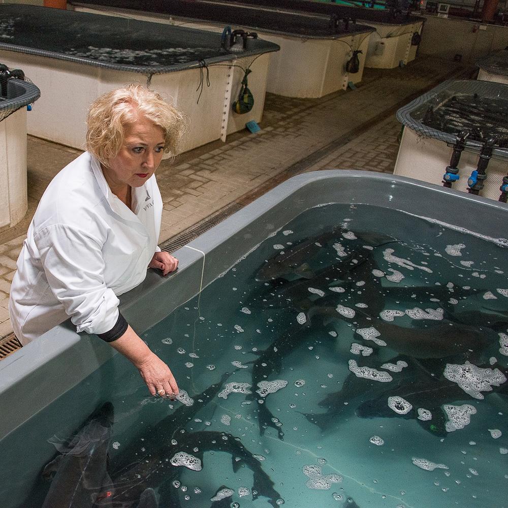Vivace Kavier aus nachhaltiger Zucht in Zürich