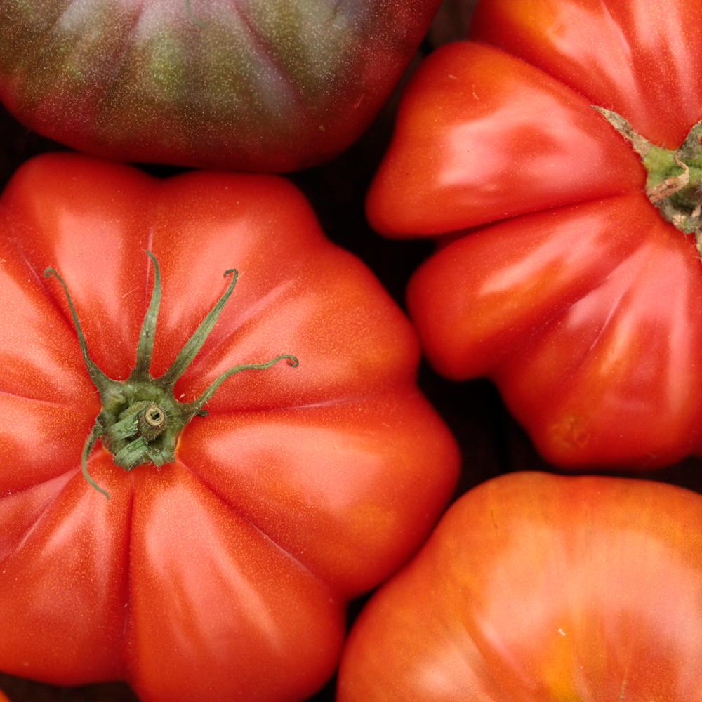 Vivi D'Angelo Foodphotography Tomaten