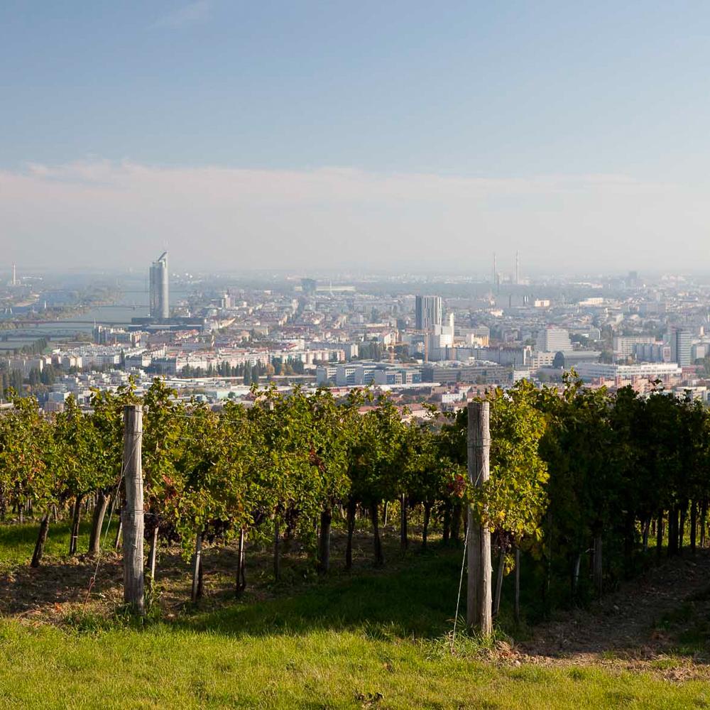 Wieninger Buschenschank am Nussberg Wien Ausblick