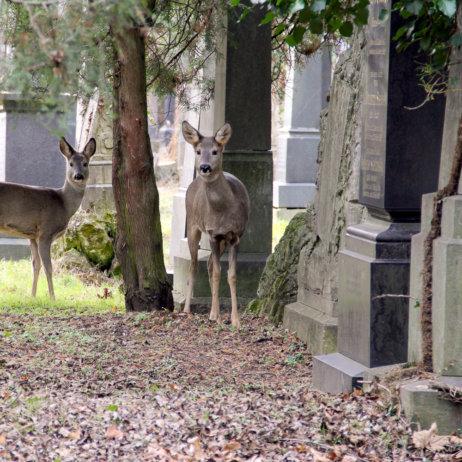 Alter jüdischer Teil des Zentralfriedhofs Wien-2