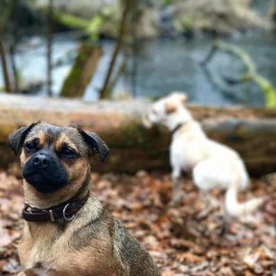 Michael Hetzinger Leben mit Hund Teil 2