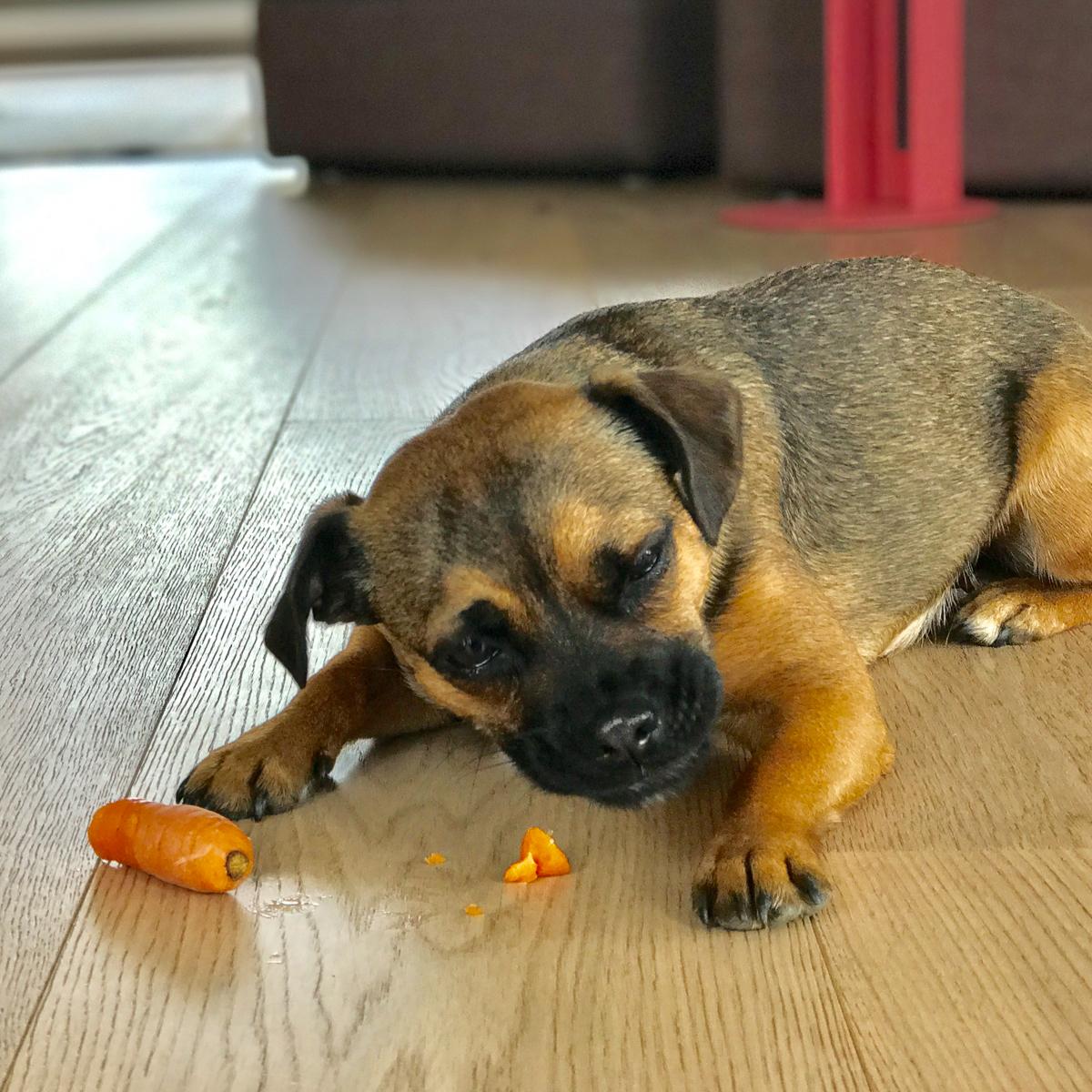 Hertha und Karotten