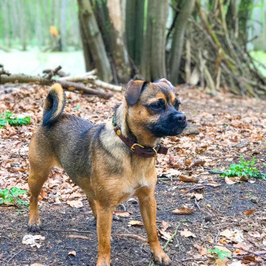 Hund Hertha im Grunewald