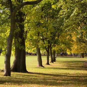 Schlosspark Berlin Niederschönhausen