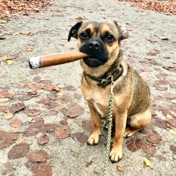 Kolumne Michael Hetzingers Leben mit Hund 17