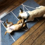 Kolumne Michael Hetzingers Leben mit Hund 18