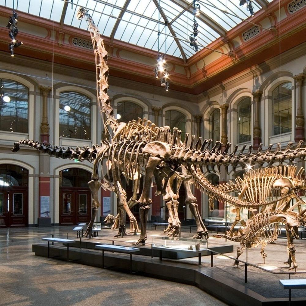 Naturkundemuseum Berlin öffnungszeiten