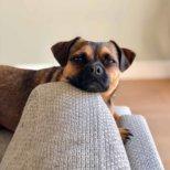 Hertha the Dog Kolumne von Michael Hetzinger-3