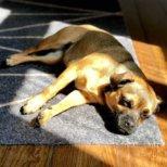 Hertha the Dog Kolumne von Michael Hetzinger-4