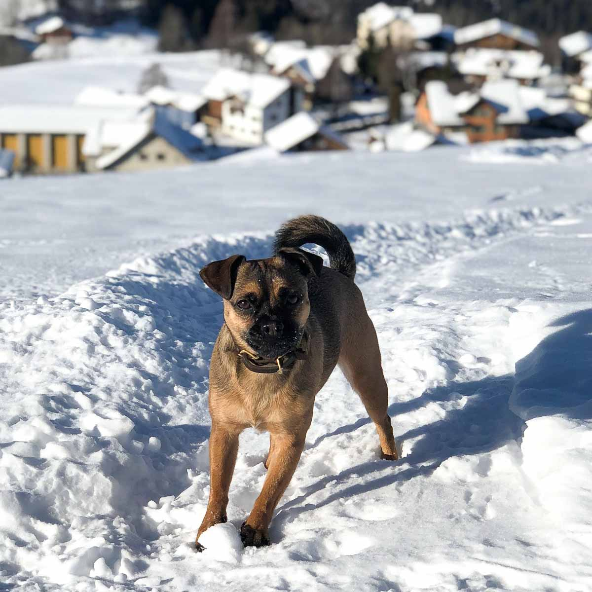 #Hertha The Dog im Schnee