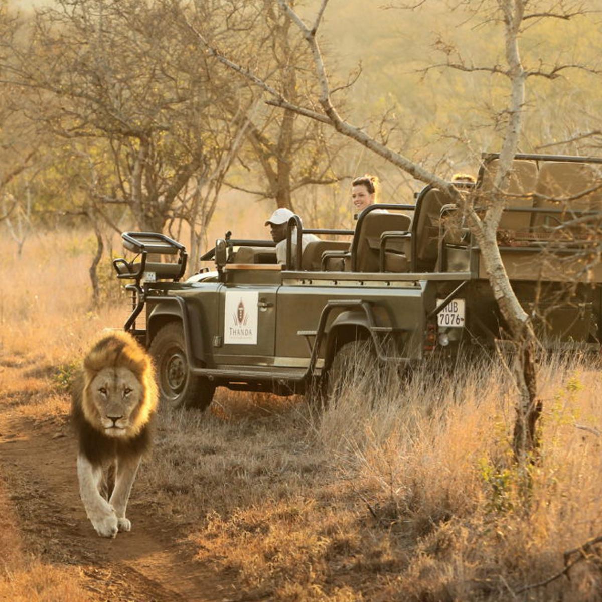 Südafrika Safari © Christian Sperka | Unsplash