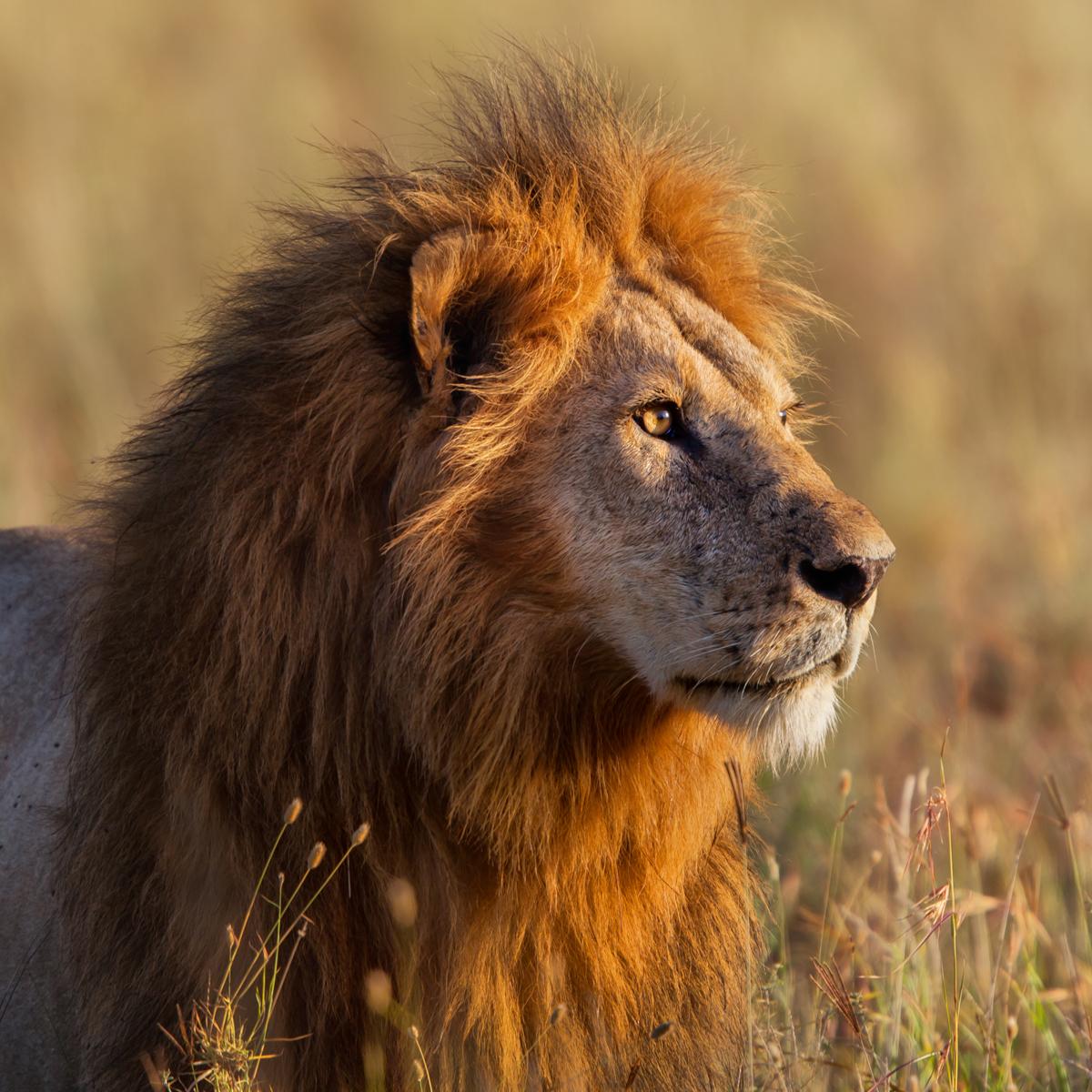Südafrika Safari | Shutterstock