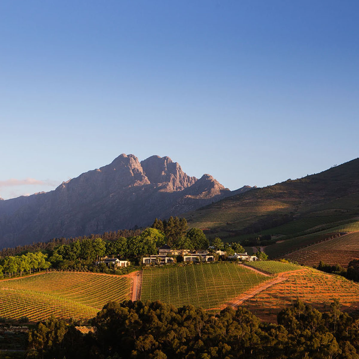 Delaire Graff Estate | Winelands