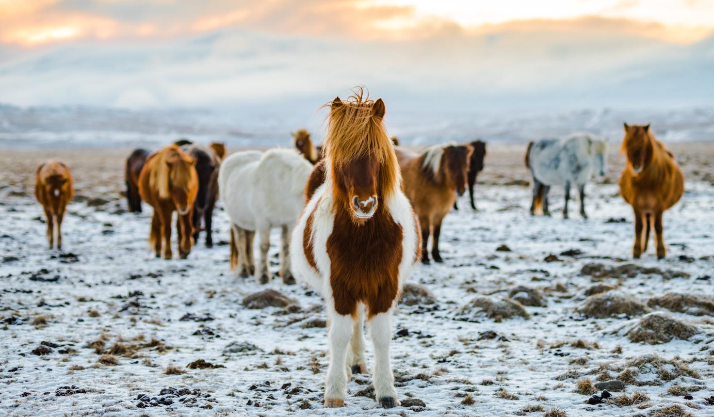 Reise nach Island