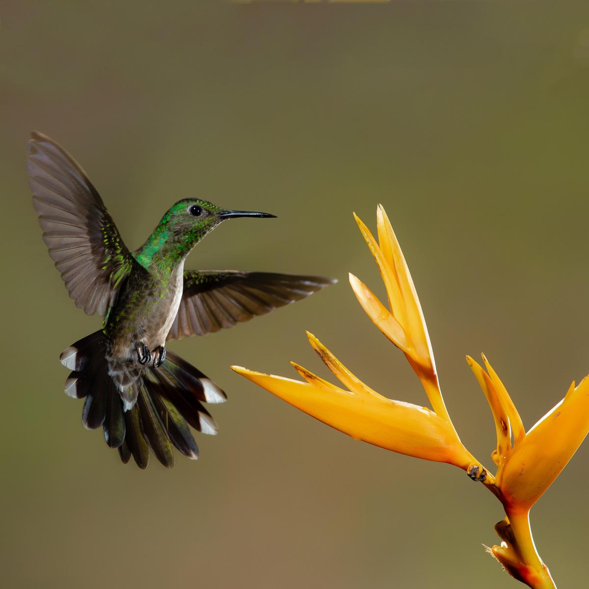 Costa Rica © Zdenek Machacek | unsplash