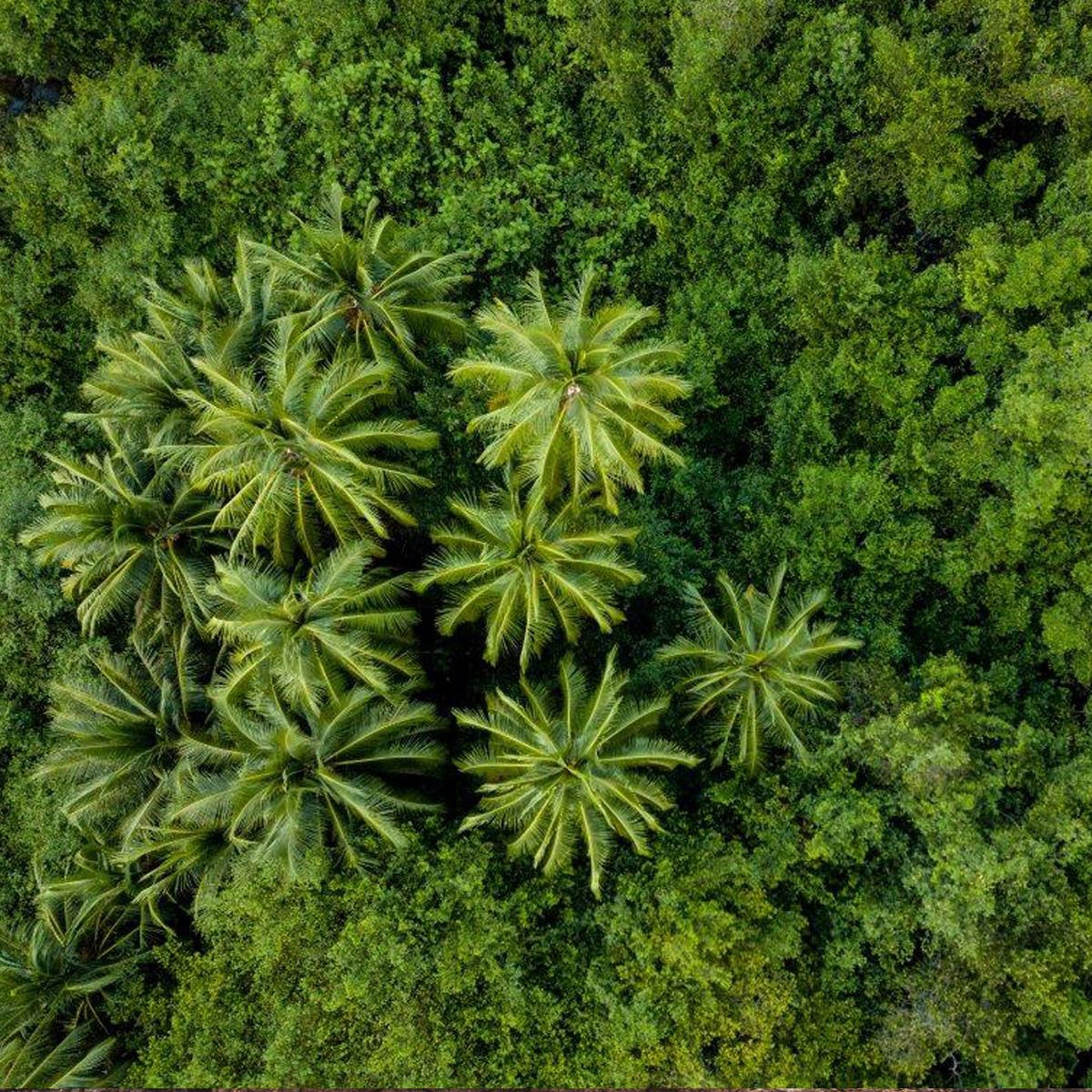 Costa Rica © Berti Benabaste | unsplash