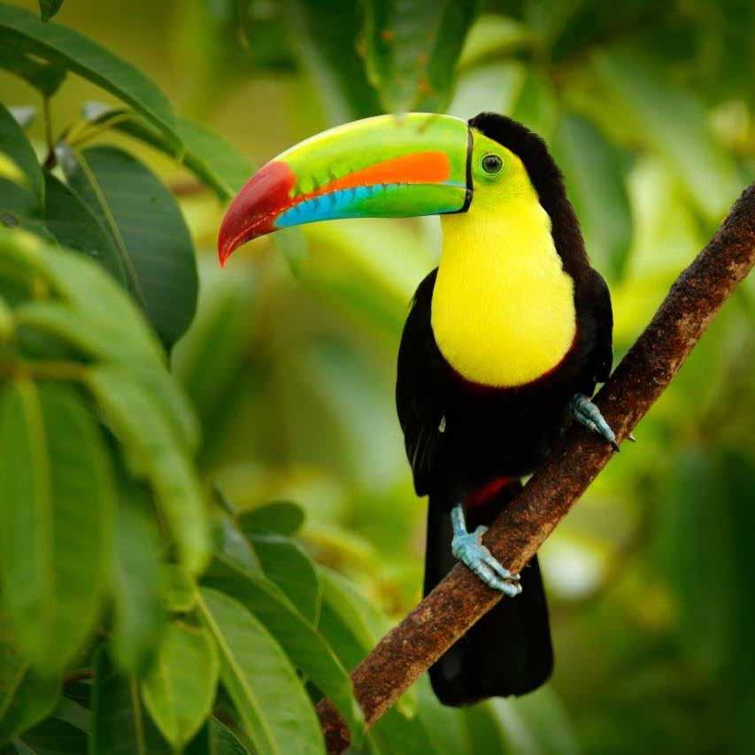 Premium Reise nach Costa Rica mit Ella Fogg