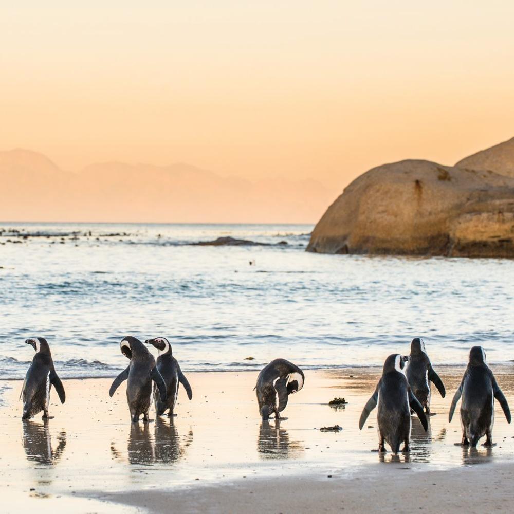 Südafrika Gemeinschaftsabenteuer für Alleinreisende-3