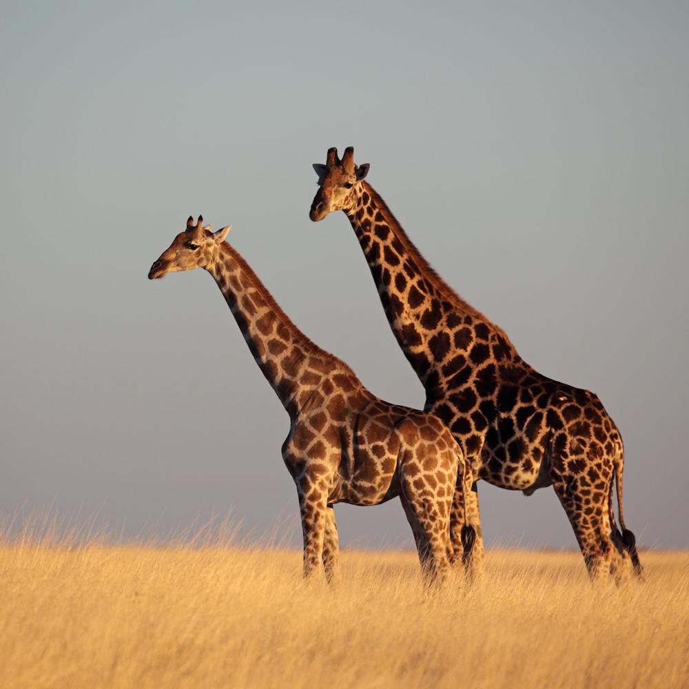 Südafrika Gemeinschaftsabenteuer für Alleinreisende-4