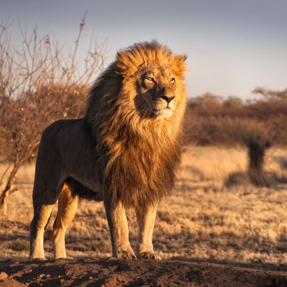 Südafrika Gemeinschaftsabenteuer für Alleinreisende-8