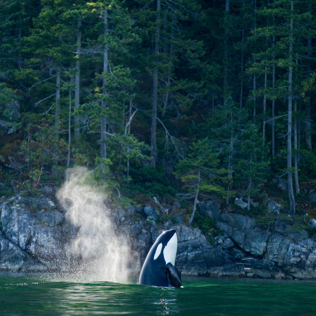 Nimmo Bay Ressort in Kanada-3