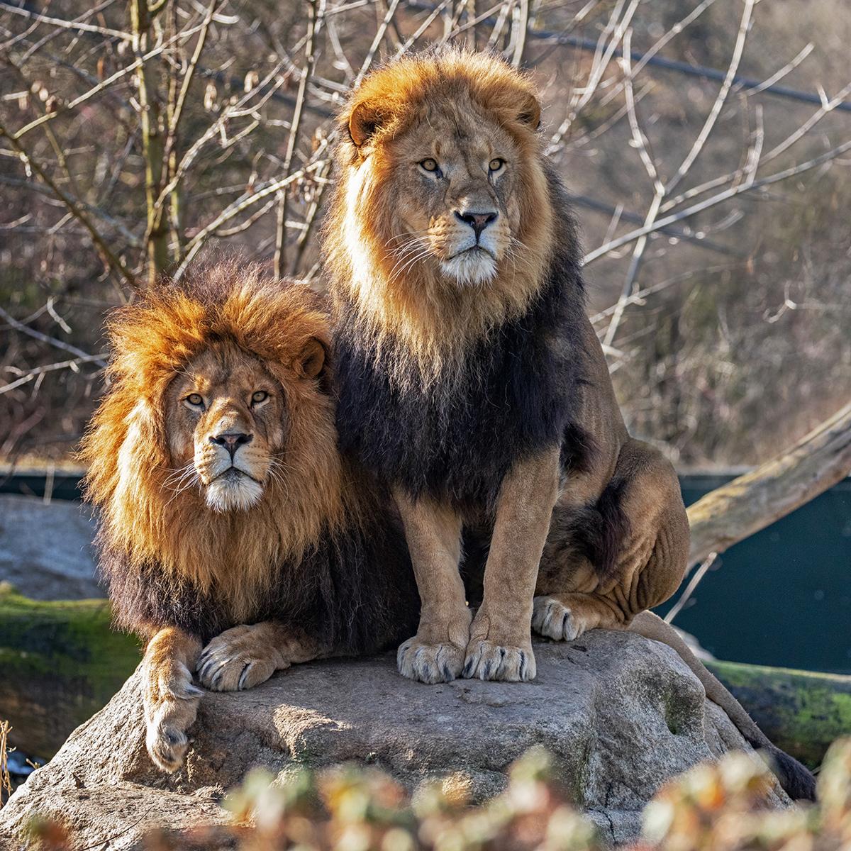Tierpark Hellabrunn in München Thalkirchen © Maria Fencik