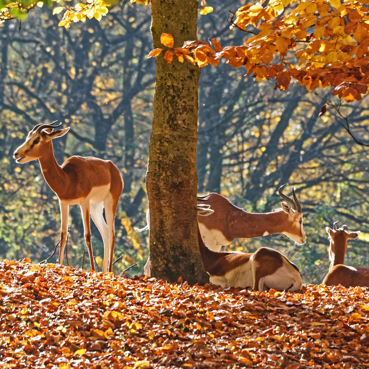 Tierpark Hellabrunn in München Thalkirchen © Michael Matziol