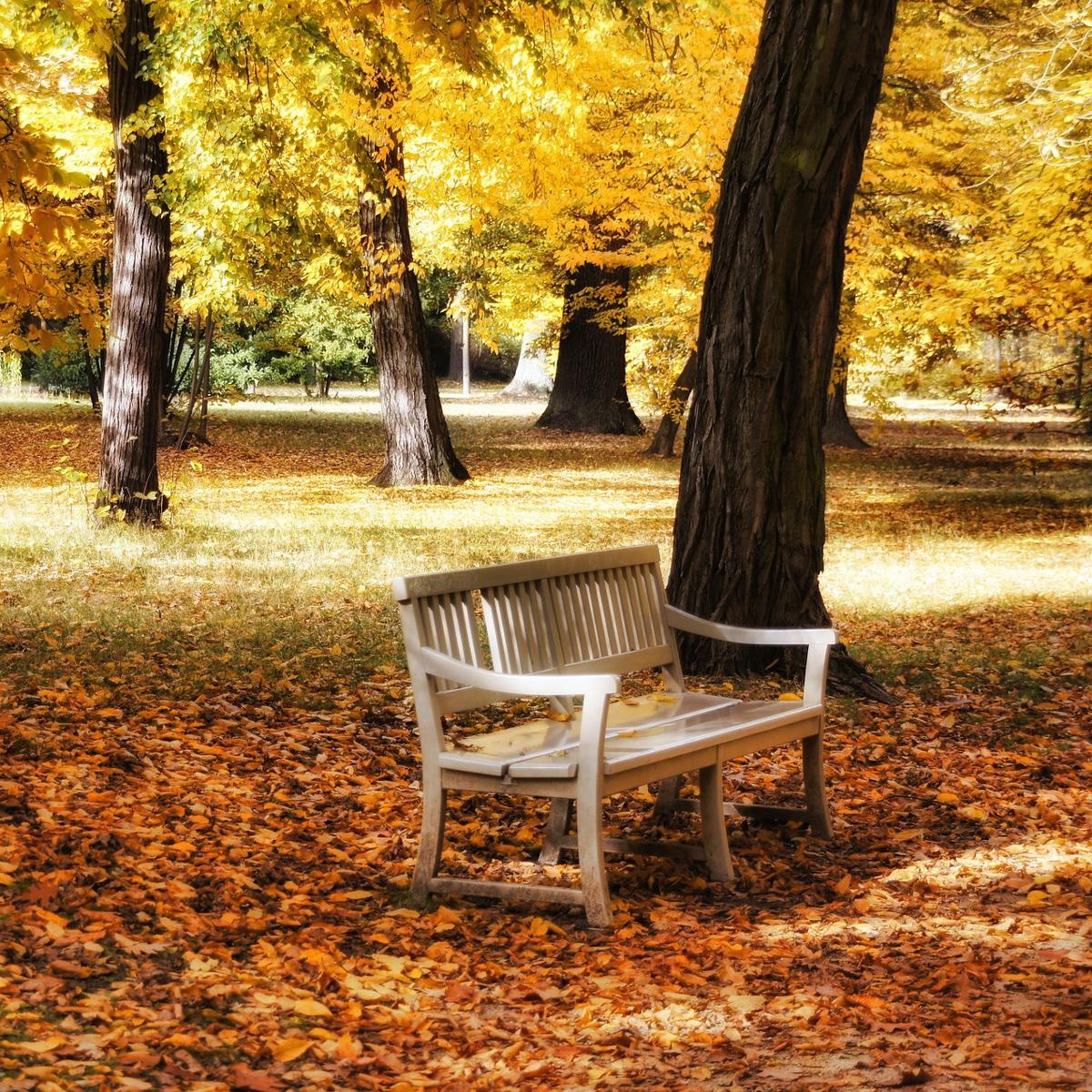Die schönsten Spaziergänge im Herbst-2
