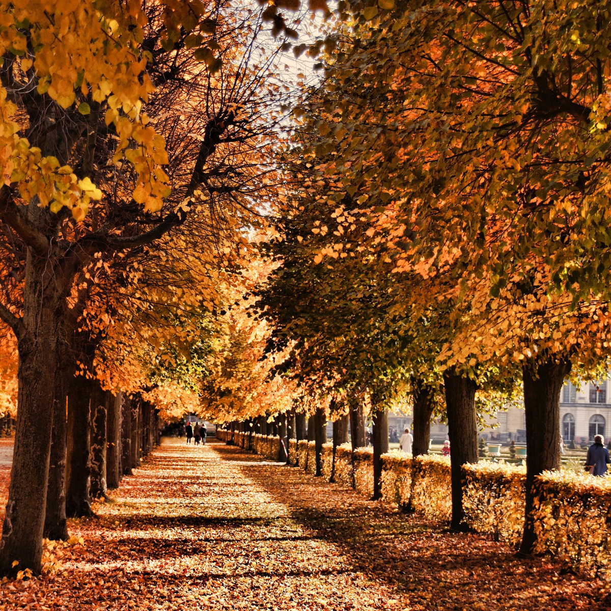 Die schönsten Spaziergänge im Herbst