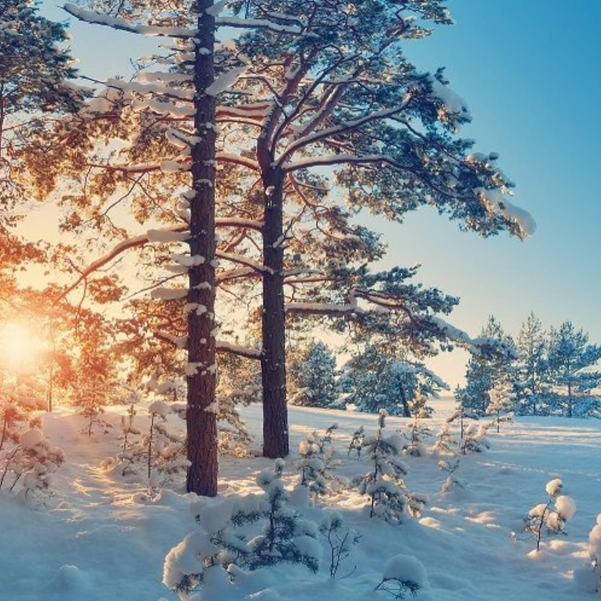 winter (1)