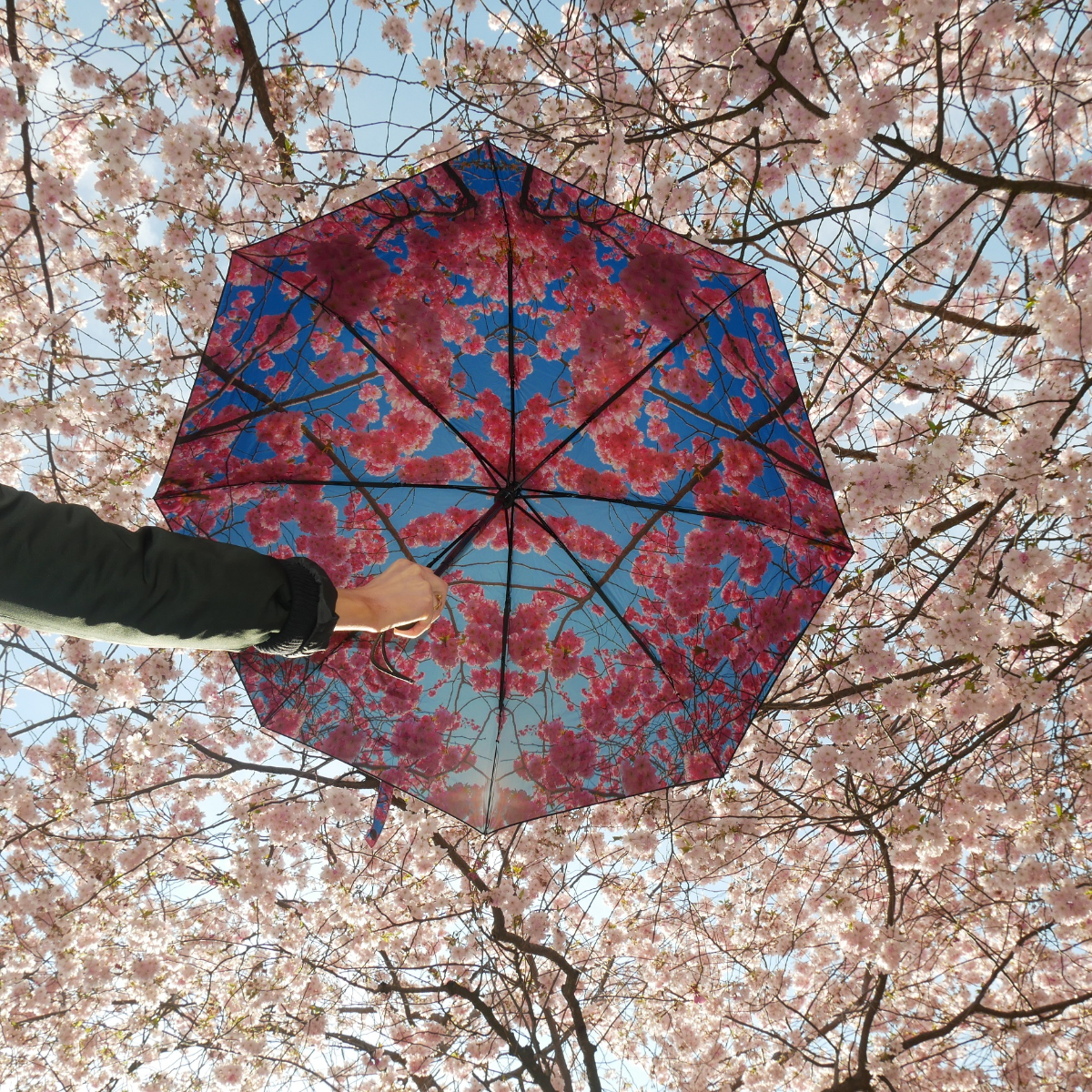 Cherry Regenschirm von HappySweeds (6)