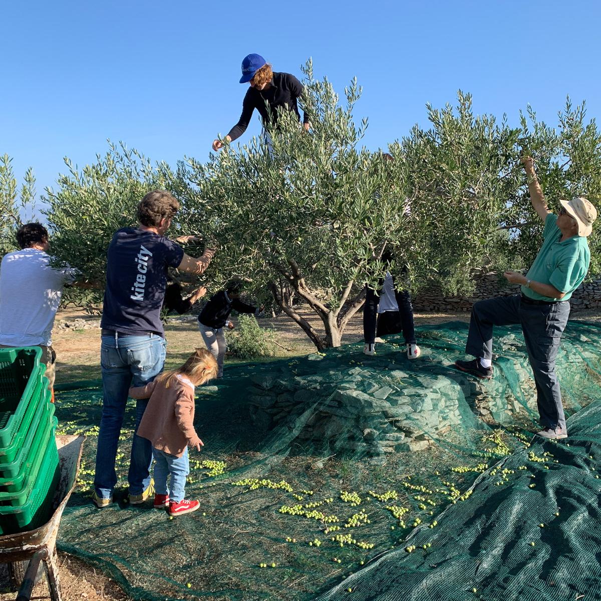 Tovar Oil Olivenoel (4)
