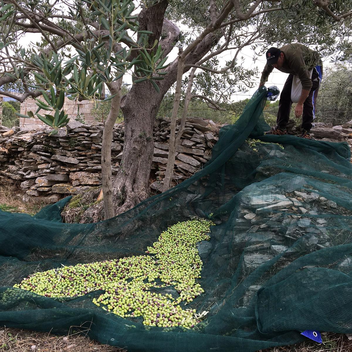 Tovar Oil Olivenoel (5)