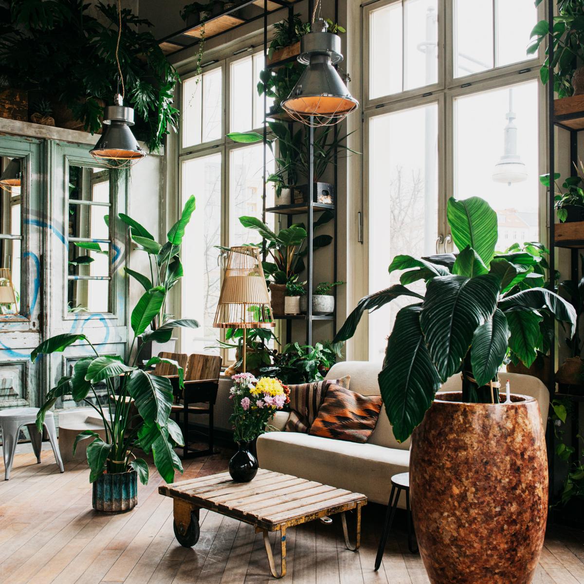 Frank Cafe Berlin cozy