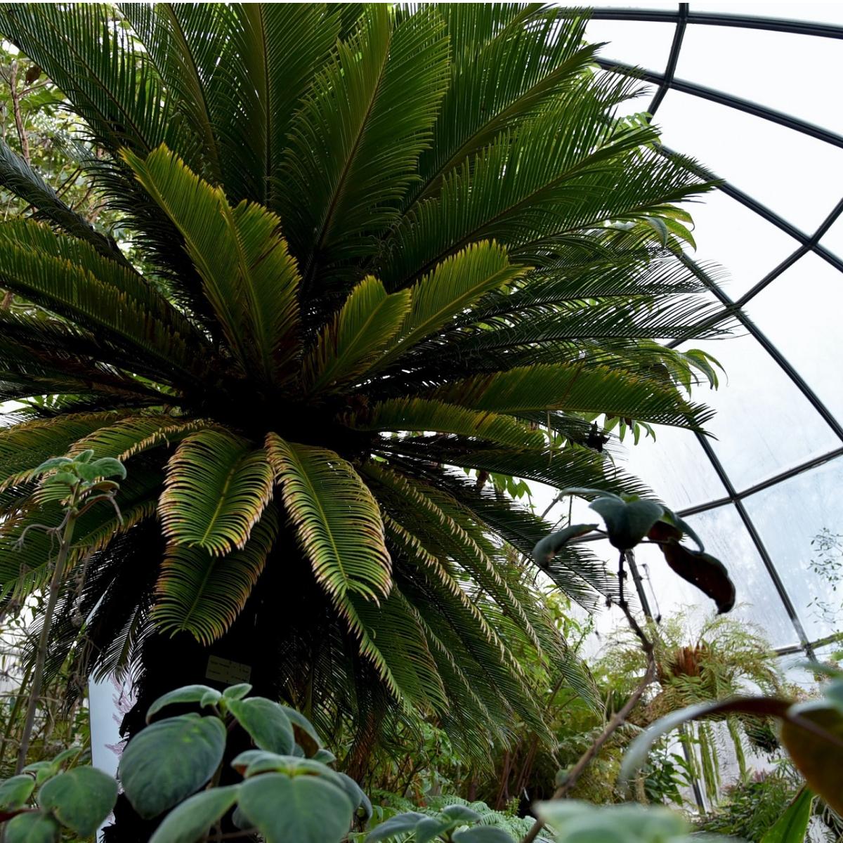 Botanischer Garten Zuerich (1)