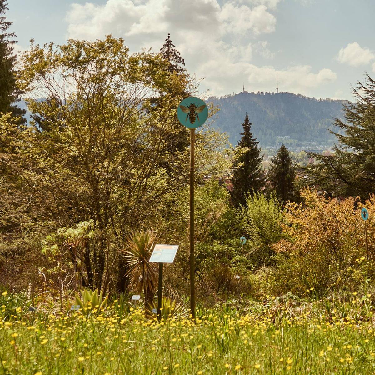 Botanischer Garten Zuerich Bienewiese