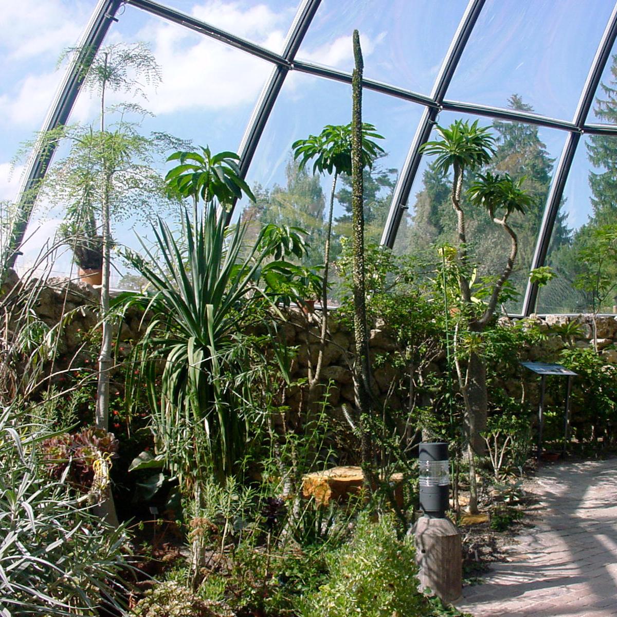 Botanischer Garten Zuerich Kakteen