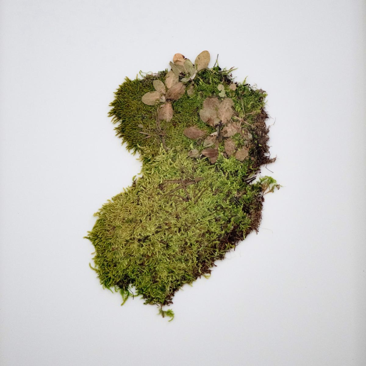 Sabrina Hoelzer Moss. Unframed plate 40 x 50 cm